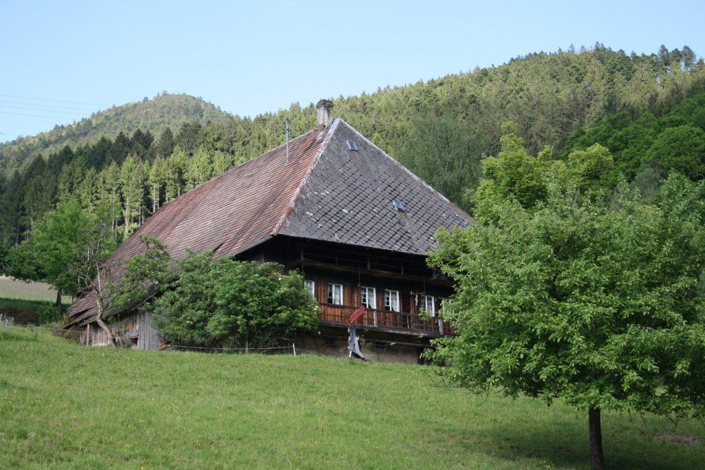 Schwarzwald, Wandern, Wanderung, Kandelhöhenweg