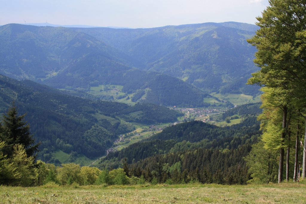 Schwarzwald, Kandelhöhenweg, Wanderung, Wandern, Frühling