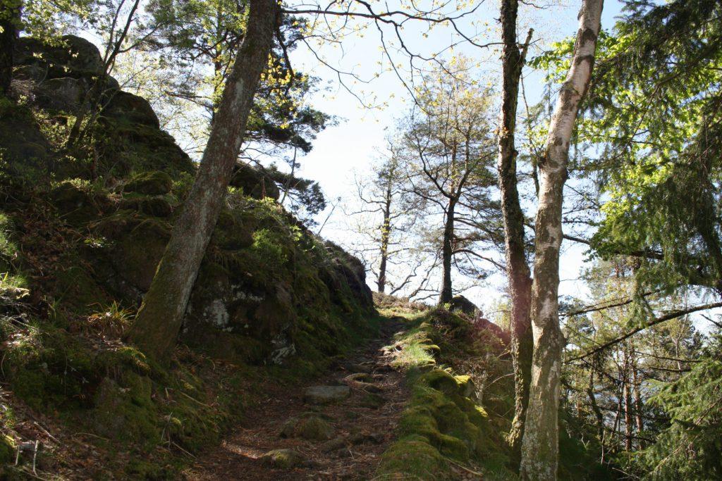 Schwarzwald, Nordschwarzwald, Murgleiter, Murgtal, Wandern, Wanderung