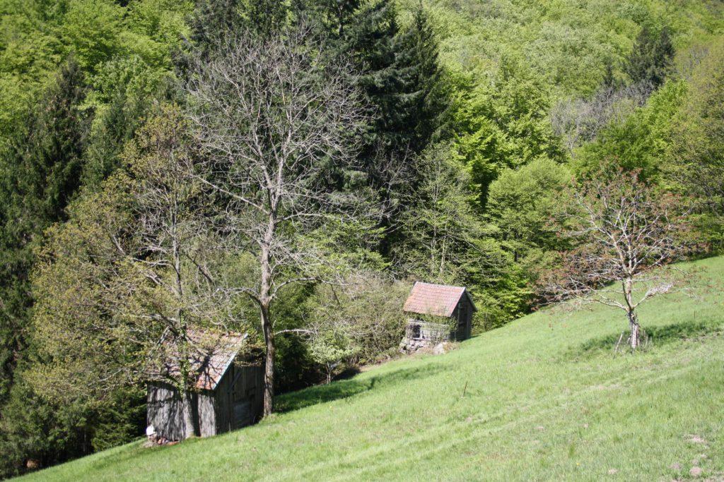 Schwarzwald, Nordschwarzwald, Wandern, Wanderung, Murgtal, Murgleiter