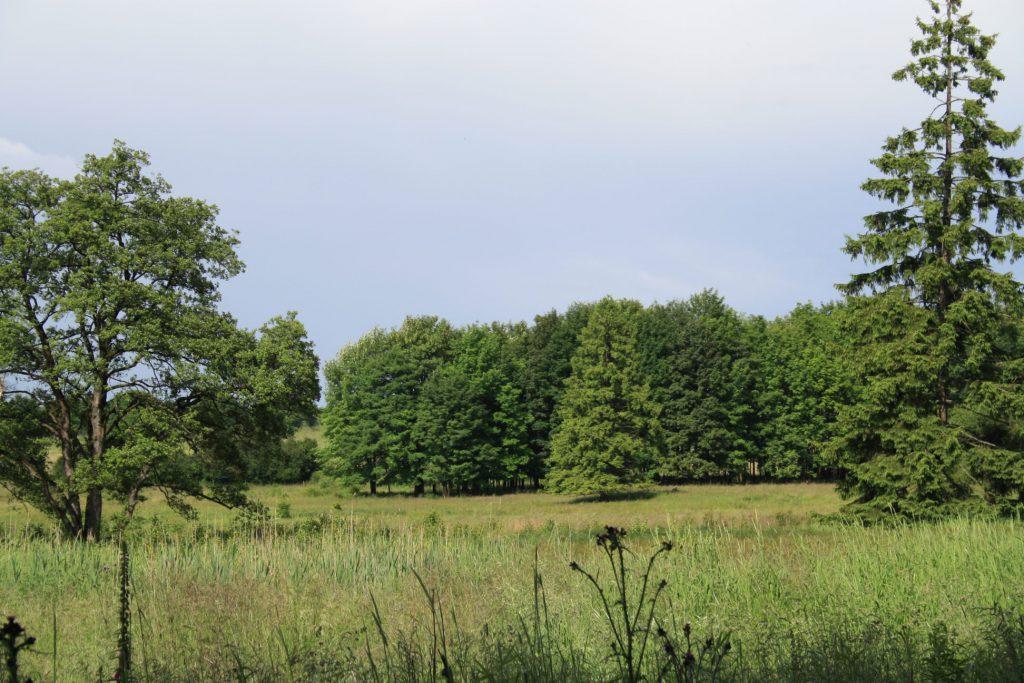 Wandermarathon, Wandern, Wanderung, Westerwaldsteig, Westerwald
