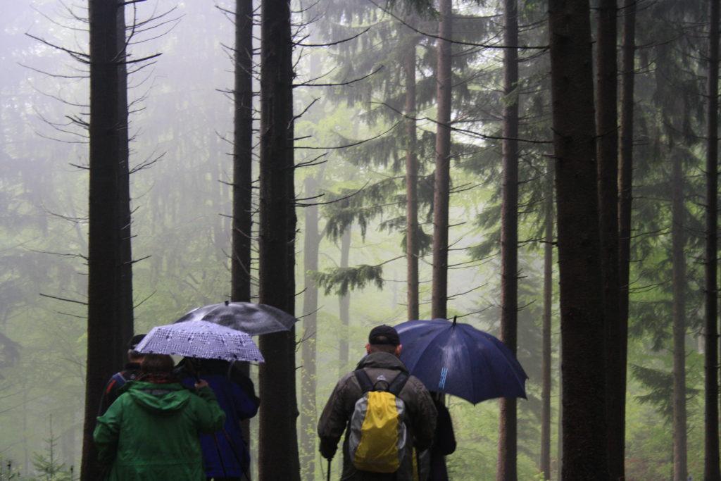 Wandern, Schwarzwald, Zell am Harmersbach, Harmersbacher Vesperweg