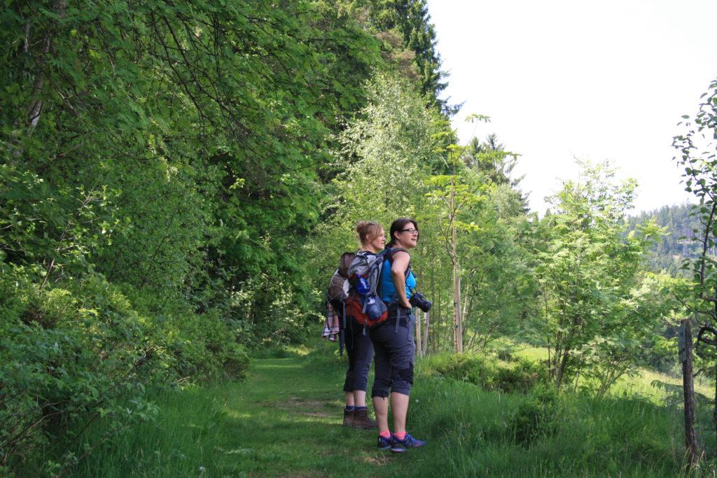Schwarzwald, Wandern, Wanderung, Nordschwarzwald, Genießerpfad, Satteleisteig, Baiersbronn