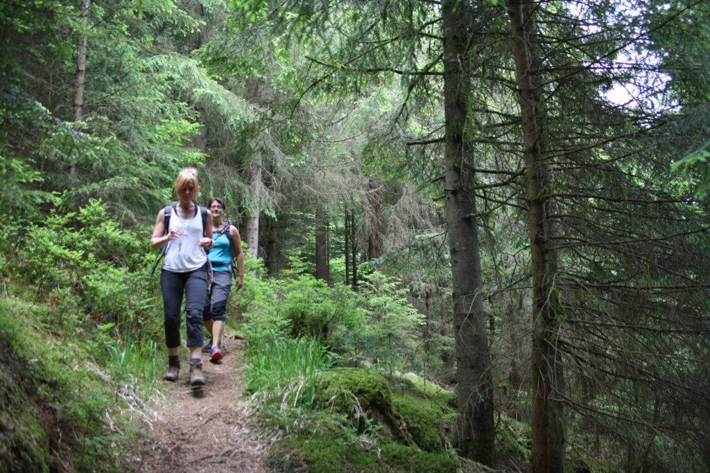 Schwarzwald, Nordschwarzwald, Wandern, Wanderung, Genießerpfad, Satteleisteig, Baiersbronn