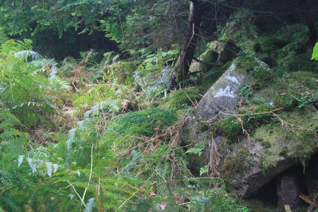 Wanderung Albtal Abenteuer Track ab Bad Herrenalb über Teufelsmühle im Naturpark Schwarzwald Mitte/Nord