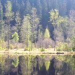Ellbachsee, Karsee, See, Nordschwarzwald, Schwarzwald, Karsee, Wandern