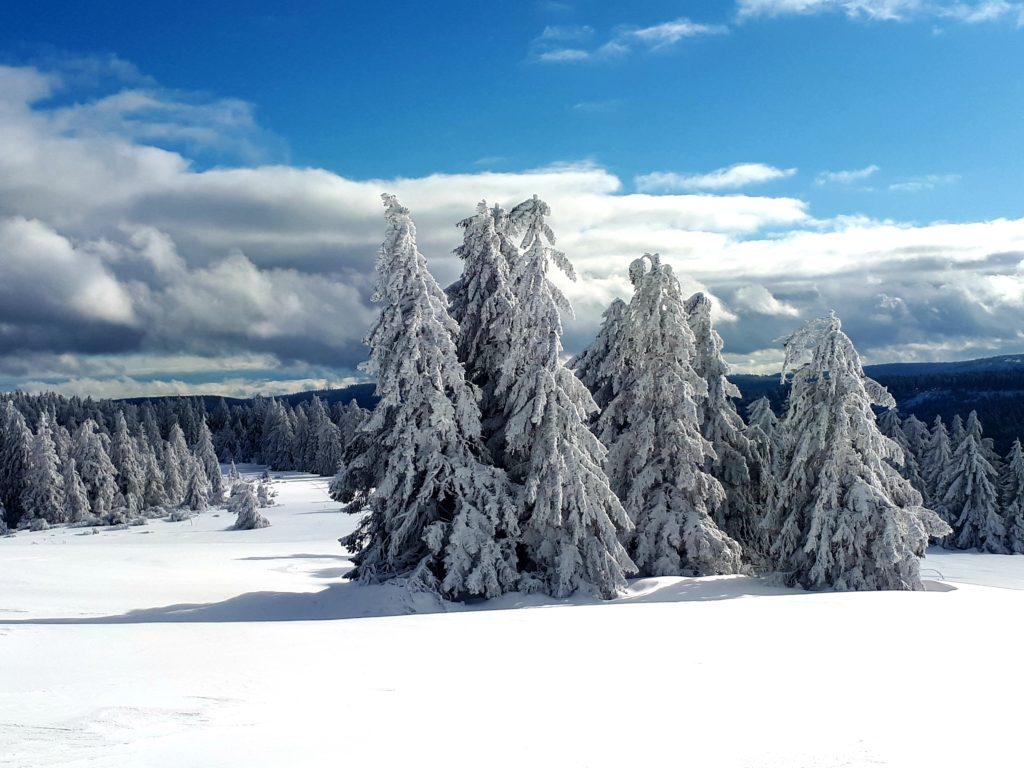 Schneeschuhwanderung im Nordschwarzwald auf den Hochkopf und die Hornisgrinde