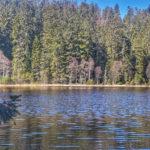Karsee Herrenwieser See im Nordschwarzwald