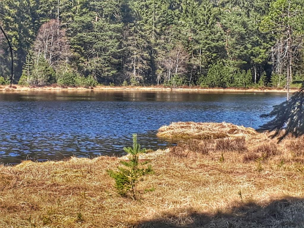 Karsee Herrenwieser See im Nordschwarzwald mit Schwingrasen